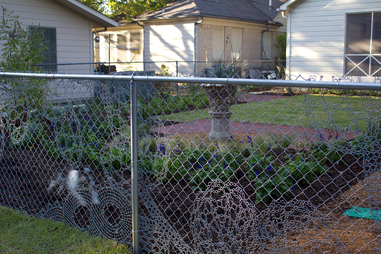 (above) This photo of the backyard's Lace Fence was taken back in 2011 just after my new back garden had been installed. That's my sweet departed Bubba being the perfect guard dog.