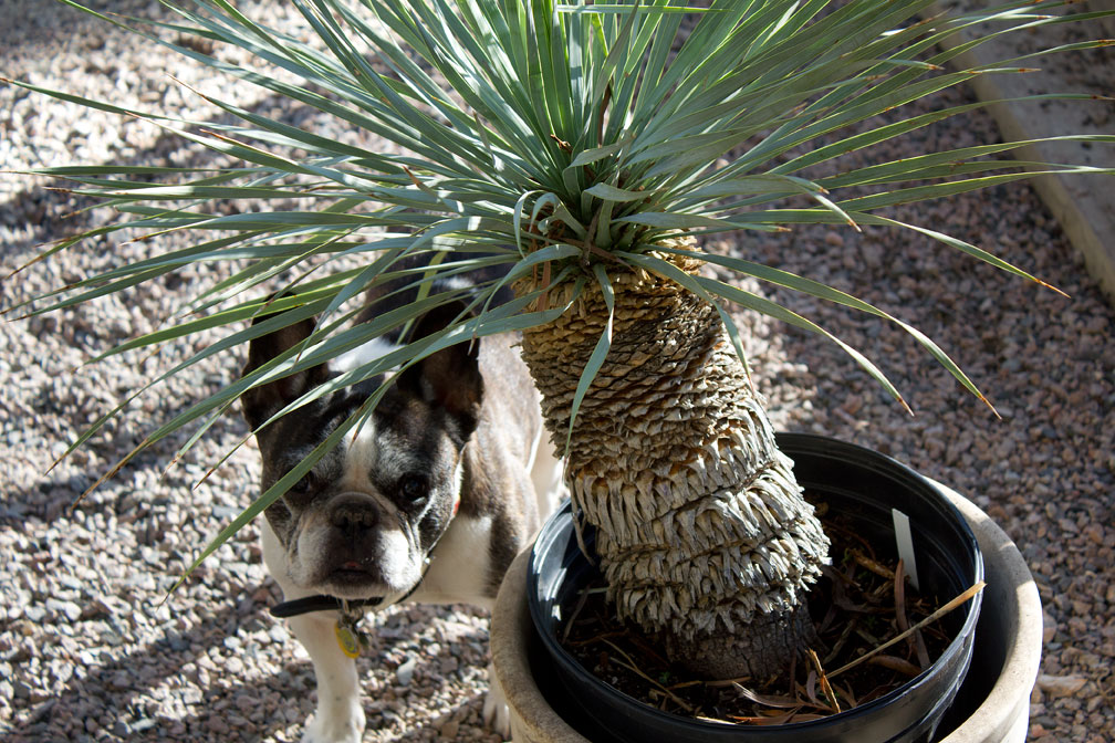 This is one plant that Bubba won't mess with.