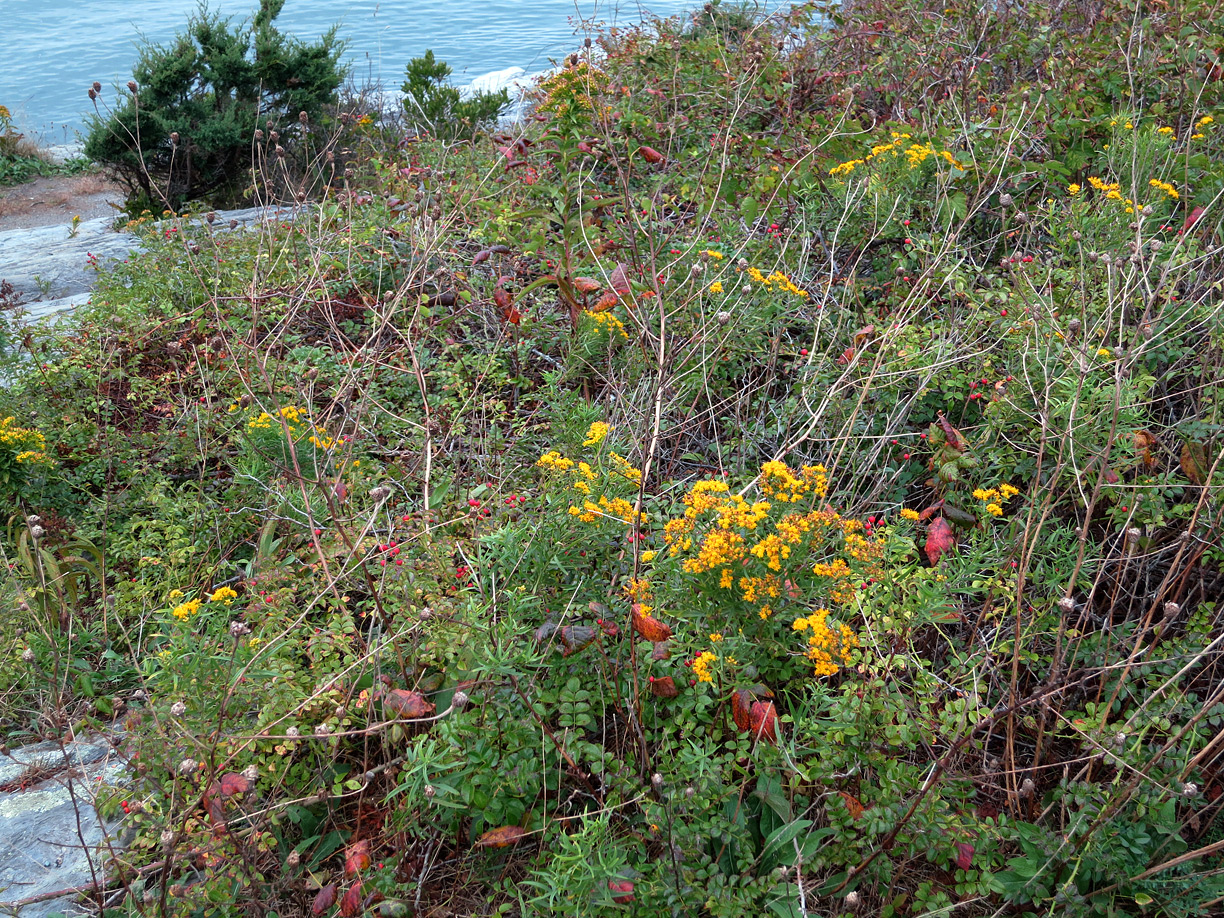 (above) I love this wild state of flower and foliage.