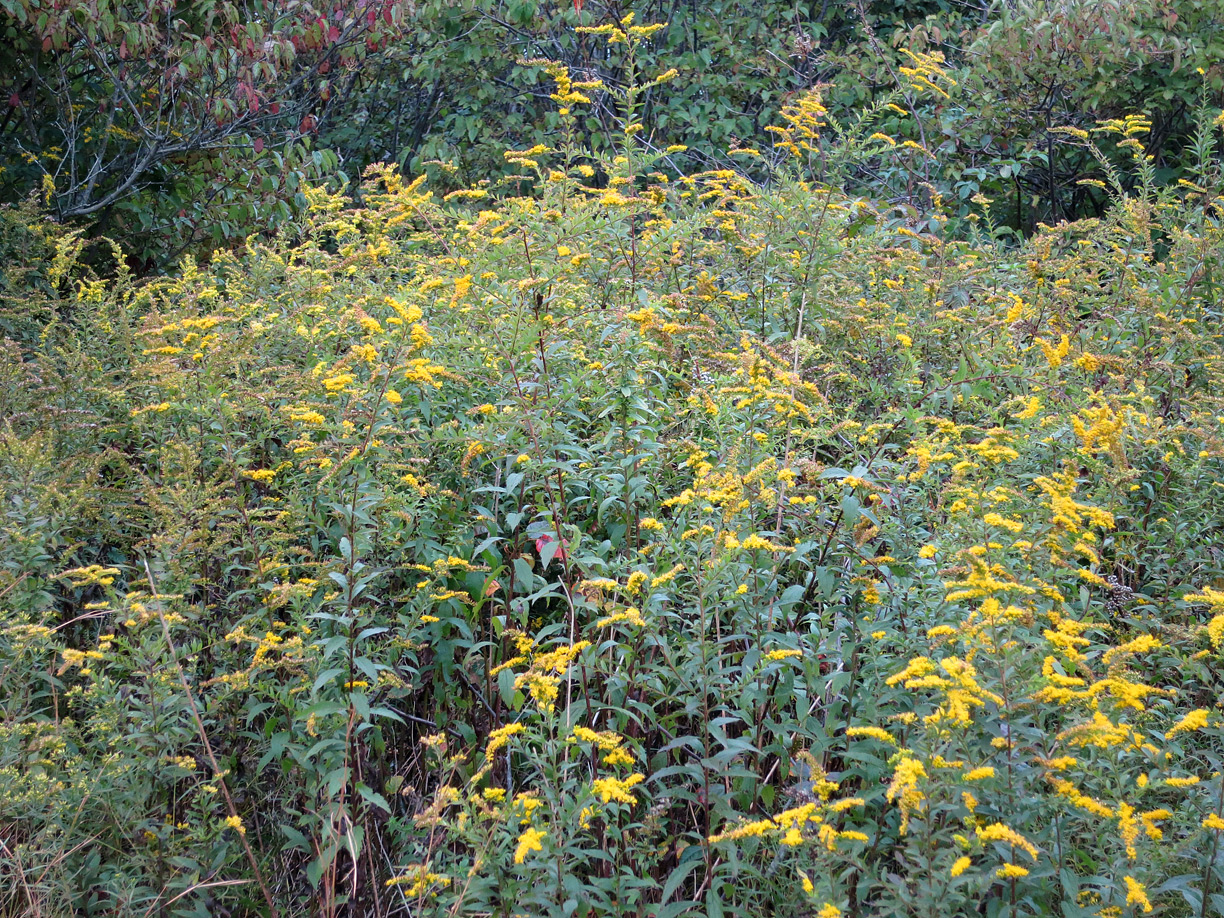(above) Even though it was October, there were blooming wild flowers.